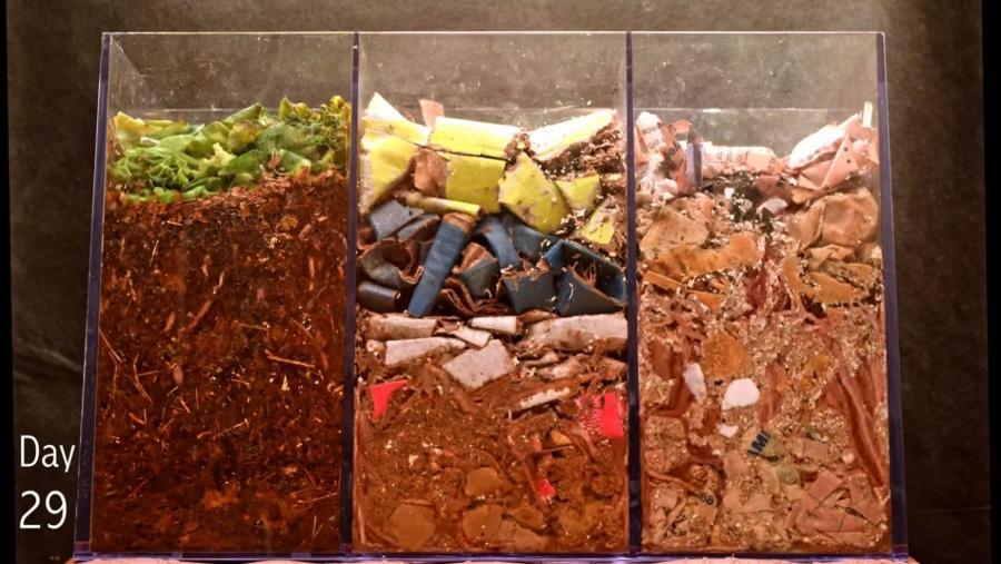 Wie Würmer Abfälle kompostieren | Was gelernt | Was is hier eigentlich los?