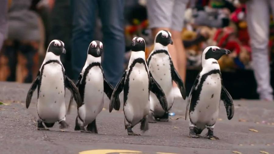 Trailer: Penguin Town – Pinguin-Dokumentation auf Netflix | Kino/TV | Was is hier eigentlich los?