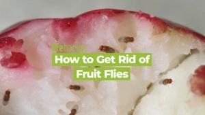Lifehack gegen Fruchtfliegen | Was gelernt | Was is hier eigentlich los?