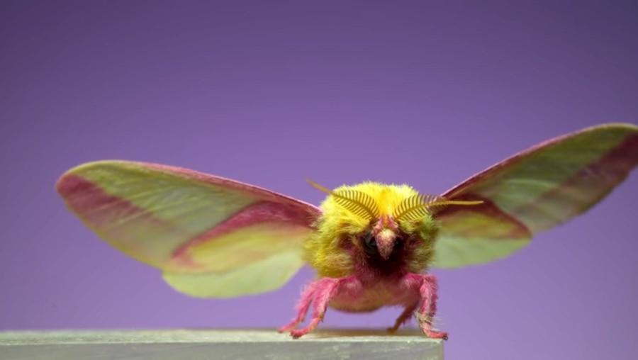 7 spektakuläre Motten in Slow Motion | Awesome | Was is hier eigentlich los?