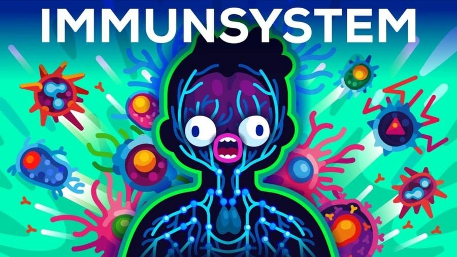 Das Immunsystem erklärt | Was gelernt | Was is hier eigentlich los?