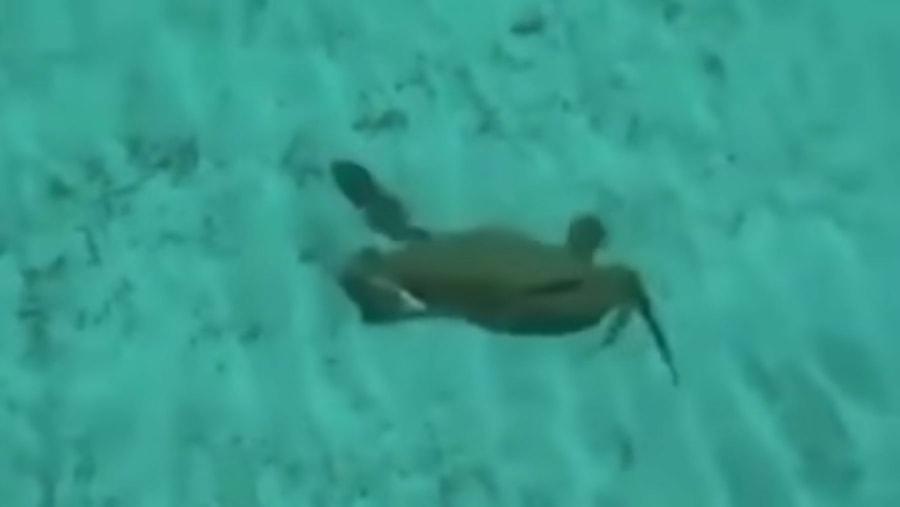 Wie schnell Krabben wirklich schwimmen können | Was gelernt | Was is hier eigentlich los?