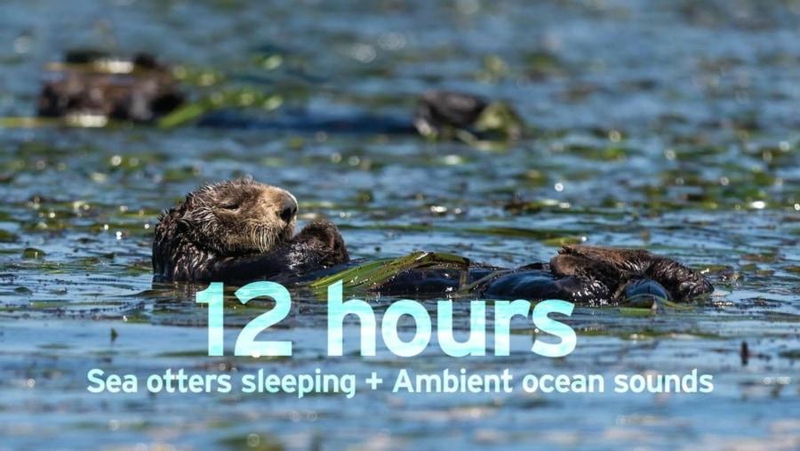 12 Stunden schlafende Otter beobachten | Awesome | Was is hier eigentlich los?