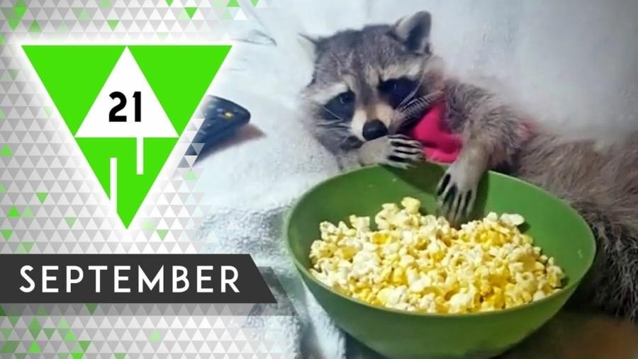 Win-Compilation September 2021 | Win-Compilation | Was is hier eigentlich los?