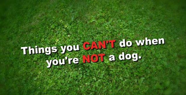 Das Leben ist ein Hund | Lustiges | Was is hier eigentlich los? | wihel.de