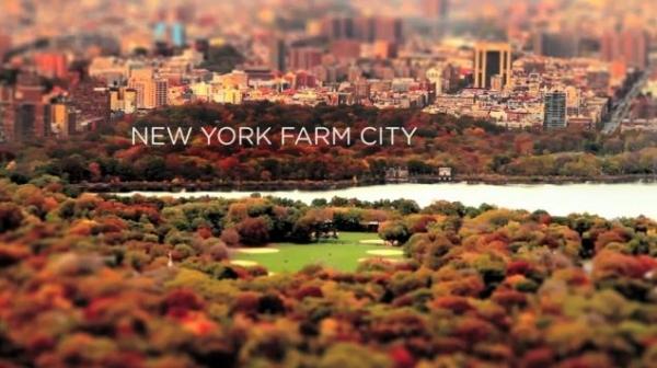 Gemüse wächst überall (mit wundervollen Tiltshift-Aufnahmen aus New York)
