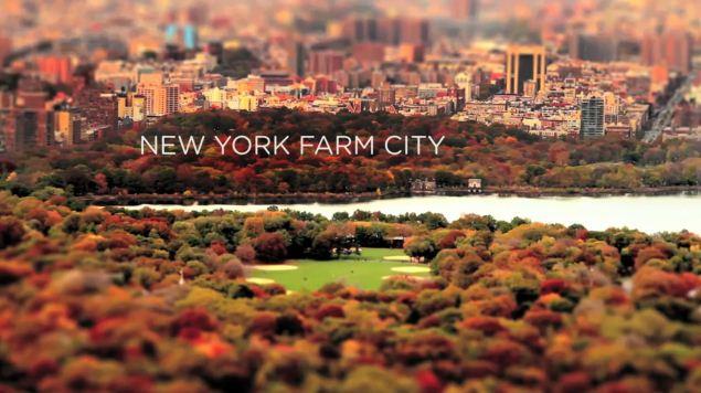 Gemüse wächst überall (mit wundervollen Tiltshift-Aufnahmen aus New York) | Was gelernt | Was is hier eigentlich los? | wihel.de